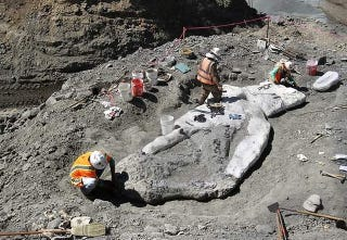 Illustration for article titled A Well-Preserved Whale Fossil Has Been Discovered on a California Mountain