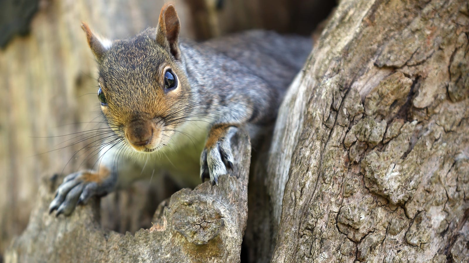 Everything We Know About the 'Aggressive Squirrel' Terrorizing Brooklyn
