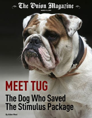 Illustration for article titled Meet Tug: The Dog Who Saved The Stimulus Package