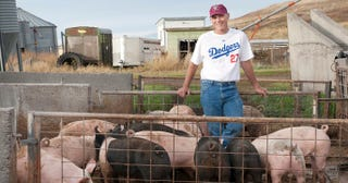 Illustration for article titled An Idaho-Based Pig Farmer Named Lindy Hinkleman Has Won $300,000 Playing Fantasy Baseball The Past Three Years