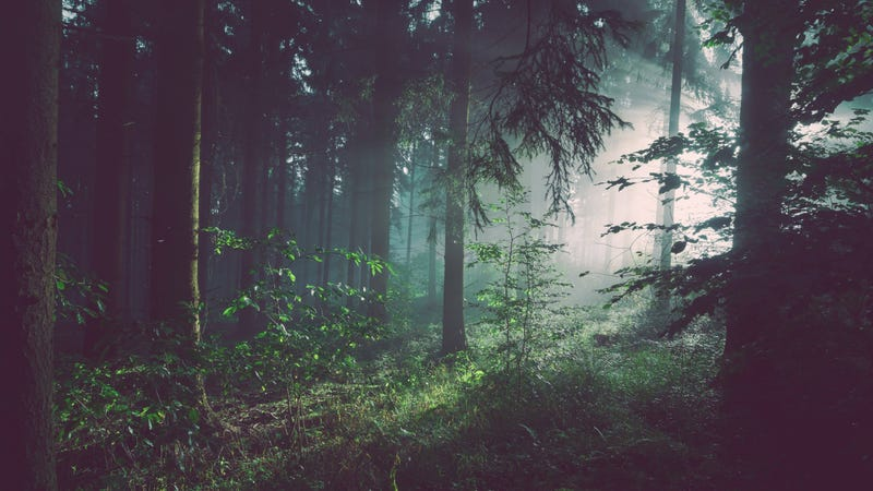 What to Do If You're Lost in the Woods