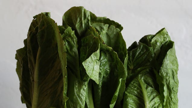 59 People Now Sickened by E. Coli Romaine Lettuce as Investigation Continues