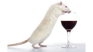 Illustration for article titled Wine pairings for the post-apocalypse: What to drink with rats, dog food, and more