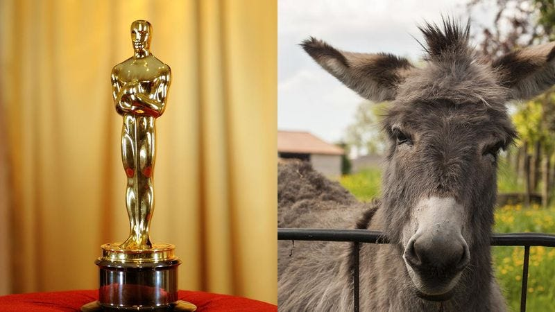 Illustration for article titled Finally! Here's The Full List Of The 2015 Oscar And Mule Awards Nominations