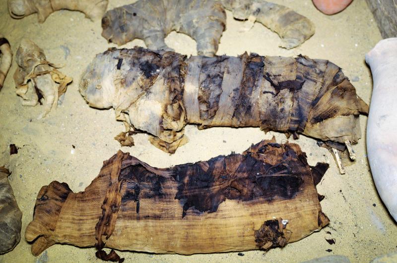 Illustration for article titled Encuentran en una tumba egipcia de hace 2.500 años docenas de momias de gatos