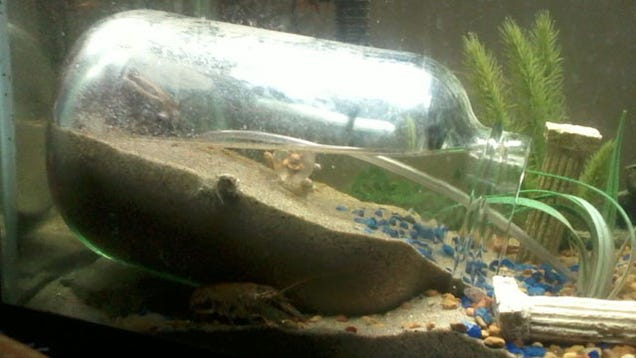 if you keep an aquarium you might want to one day keep semi aquatic ...