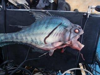Illustration for article titled Piranha 3D