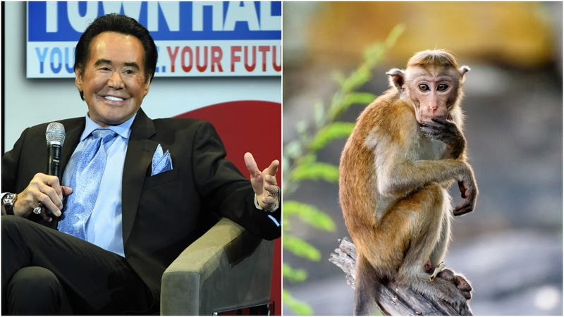 Illustration for article titled Wayne Newton gets sued over an alleged pet monkey attack