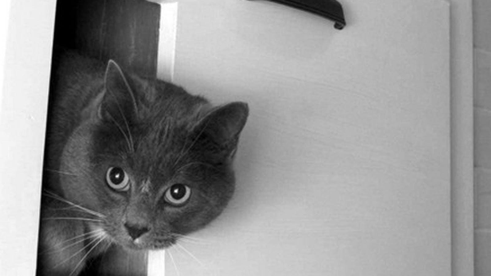 Build A Concealed And Vented Cat Box For Odor Free Litter