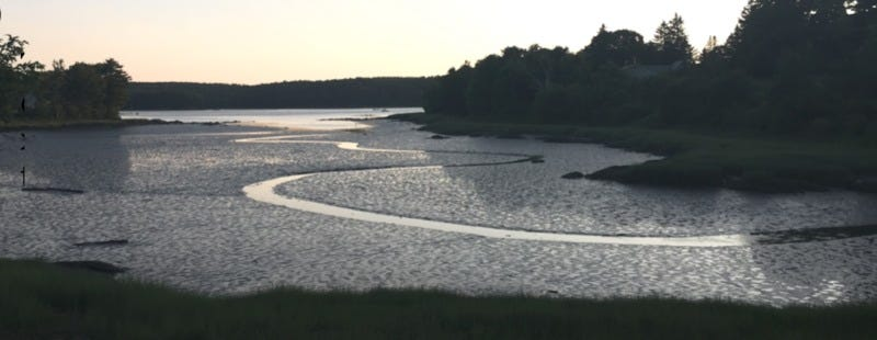 Illustration for article titled Pretty Fractal Patterns Pop Up in Maine's Tidal Ponds