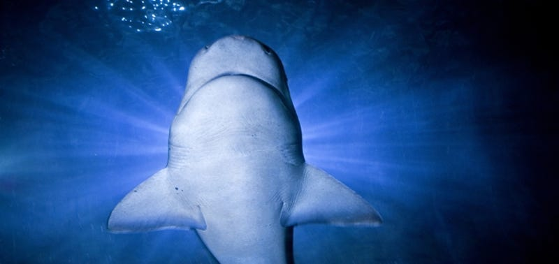 Amazing Museums Where You Can Bring A Sleeping Bag And Stay The - 10 awesome aquariums where you can spend the night with sharks