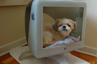 Illustration for article titled This Old CRT Monitor Is A Cute Dog's Bed