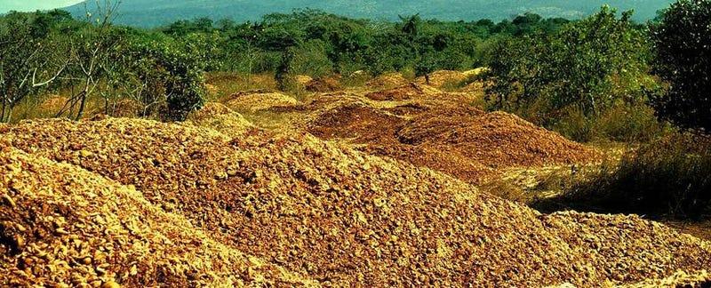 Cómo 12.000 toneladas de cáscara de naranja transformaron un paisaje devastado en un exuberante bosque