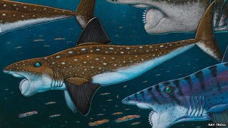 Illustration for article titled This horrifying Palaeozoic fish had a buzz saw for a face
