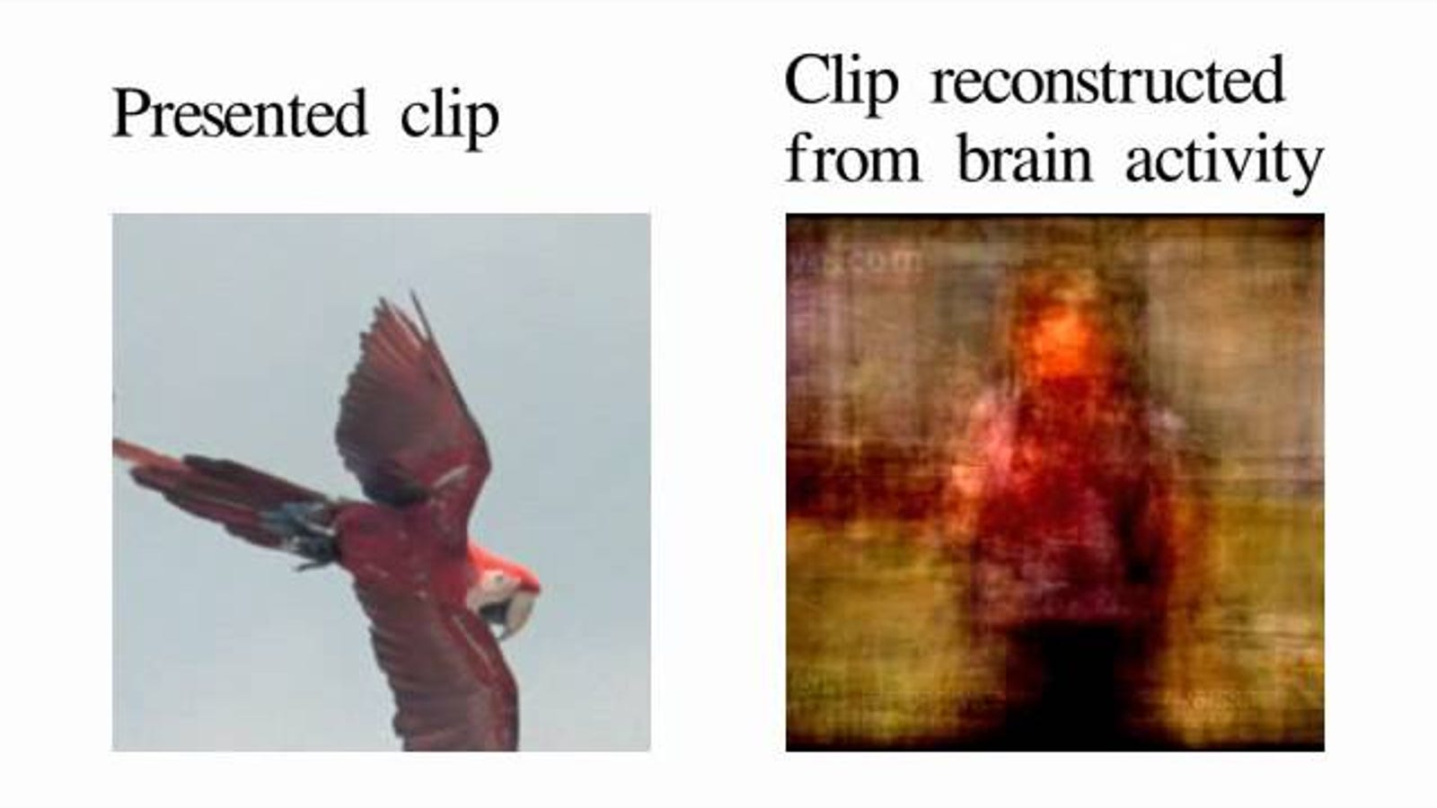 Scientists Reconstruct Brains' Visions Into Digital Video In Historic Experiment