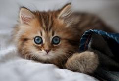 Illustration for article titled i have a kitten