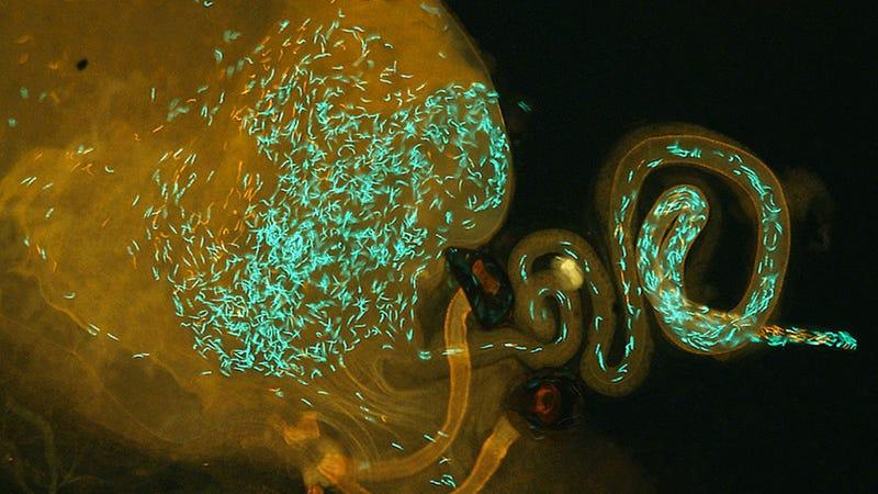 of wars biology Critique evolutionary sperm