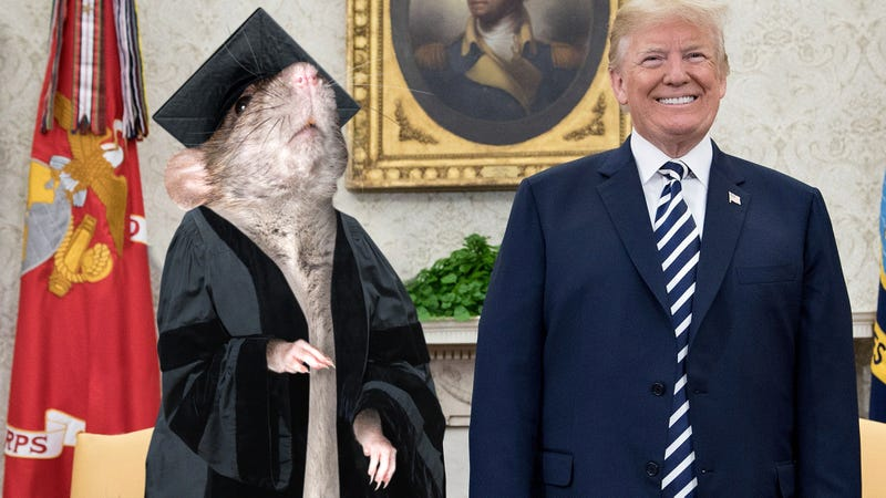Patriots Rejoice! Donald Trump Has Appointed Professor Rat As The U.S. Secretary Of Fireworks