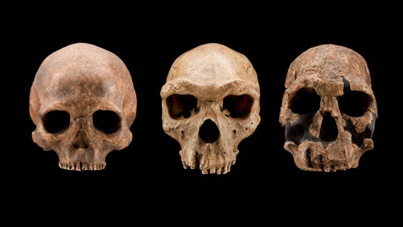 ancient humans were just having sex with everyone