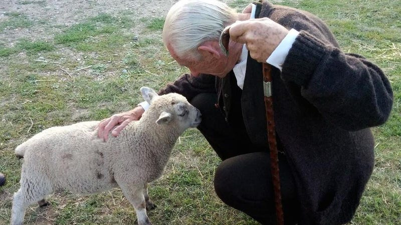 Illustration for article titled Ian McKellen Had a Little Lamb