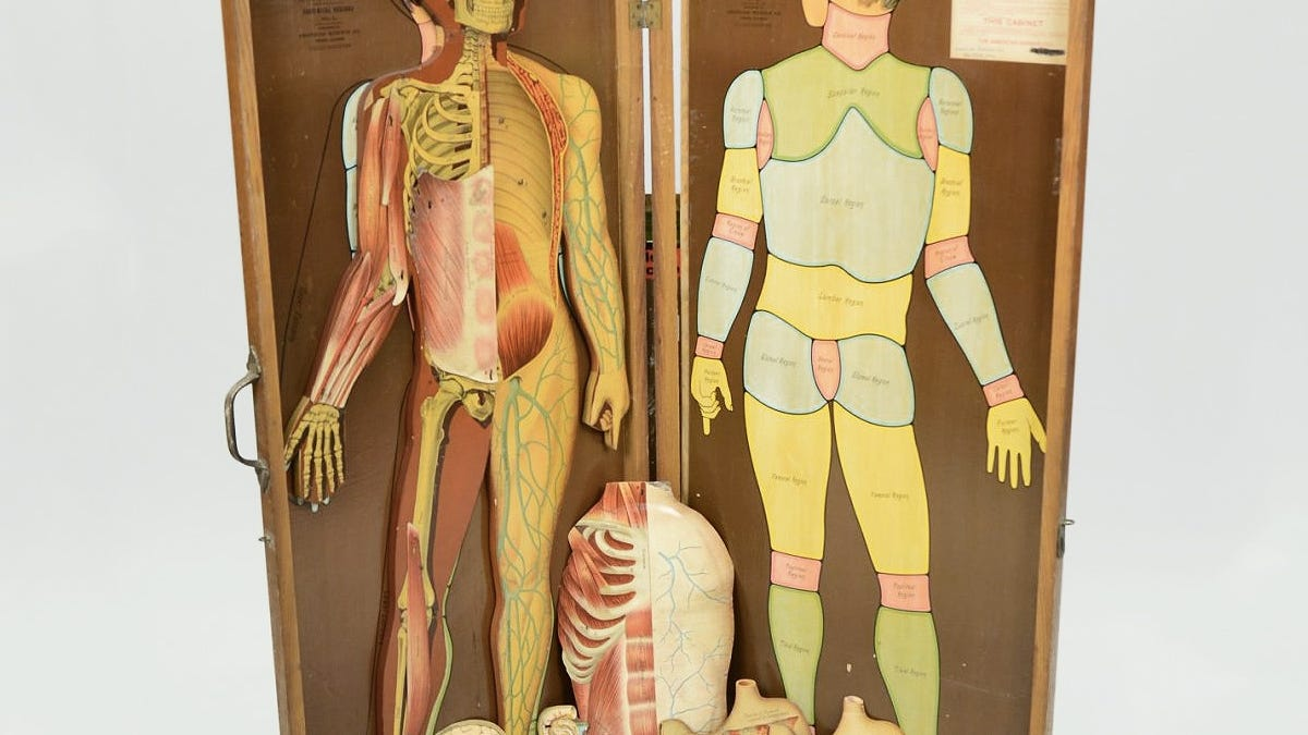 29 Anatomical Models That Will Haunt Your Dreams Tonight