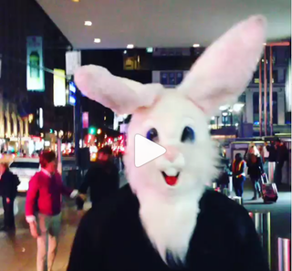 Illustration for article titled David Wilson Explores Times Square In A Rabbit Head, For Some Reason