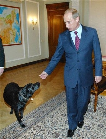 Illustration for article titled Vladimir Putin Tests Russian GPS on His Own Dog