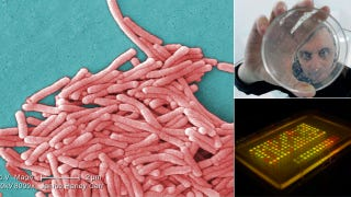 Illustration for article titled Colored Bacteria Can Be Used to Send Secret Spy Messages