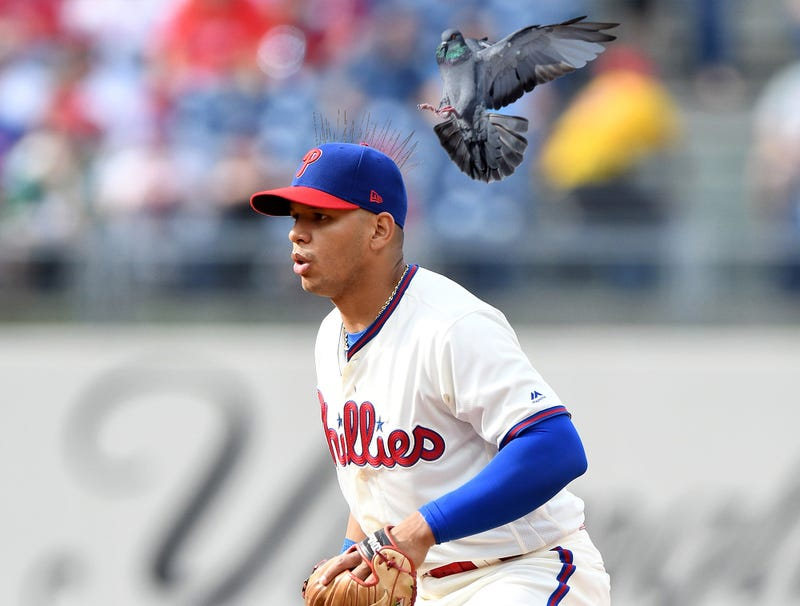 Illustration for article titled New Era Introduces New Spiked Baseball Caps To Keep Pigeons From Landing On Players' Heads