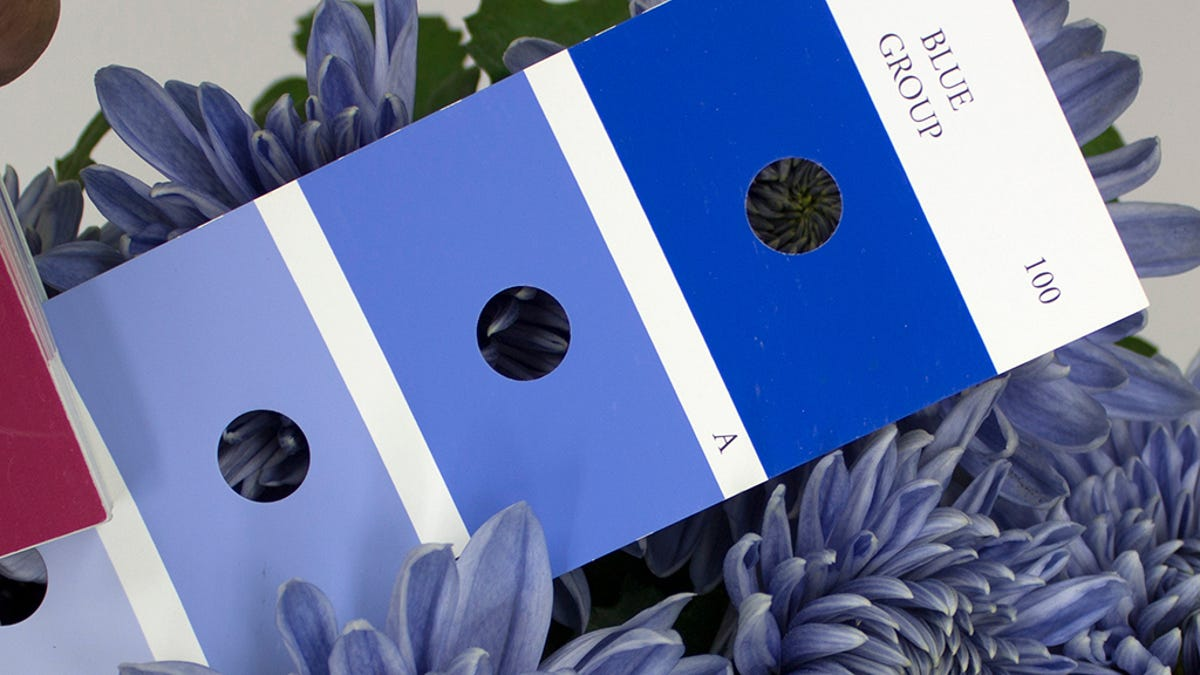 Is It Possible To Engineer A Truly Blue Flower