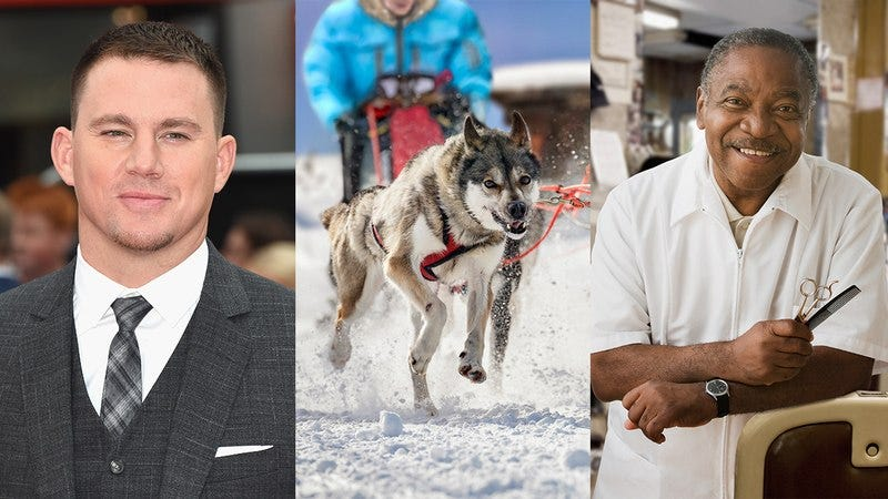 Channing Tatum, a sled dog, and a barber.