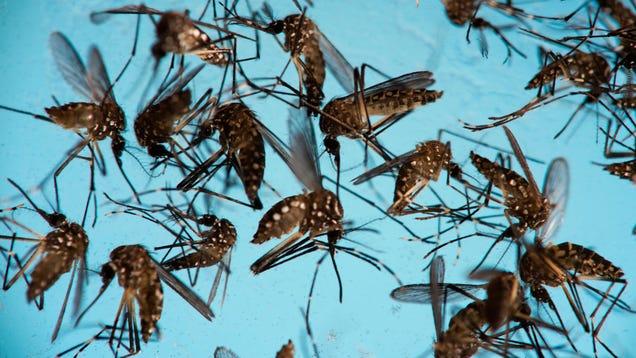 Zika Virus Kills Brain Cancer Cells in Mice