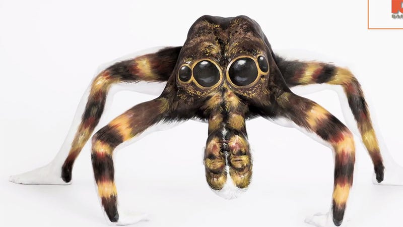 Illustration for article titled Don't Freak Out: This Is Not a Tarantula (But It Is AMAZING)