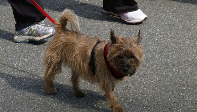 Pets Ride Free on Amtrak Through March 31