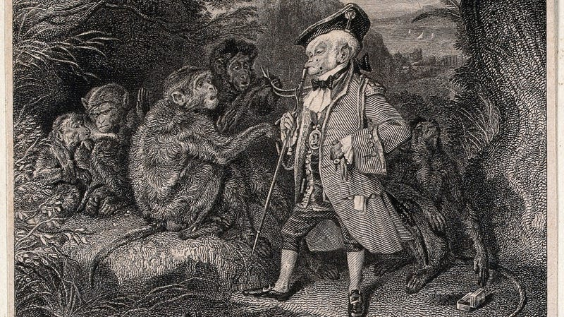 Illustration for article titled Now We Have to Worry About Monkey Herpes on Top of Everything Else
