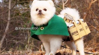 Illustration for article titled Little Dogs Make Attack on Titan Cosplay Cuter