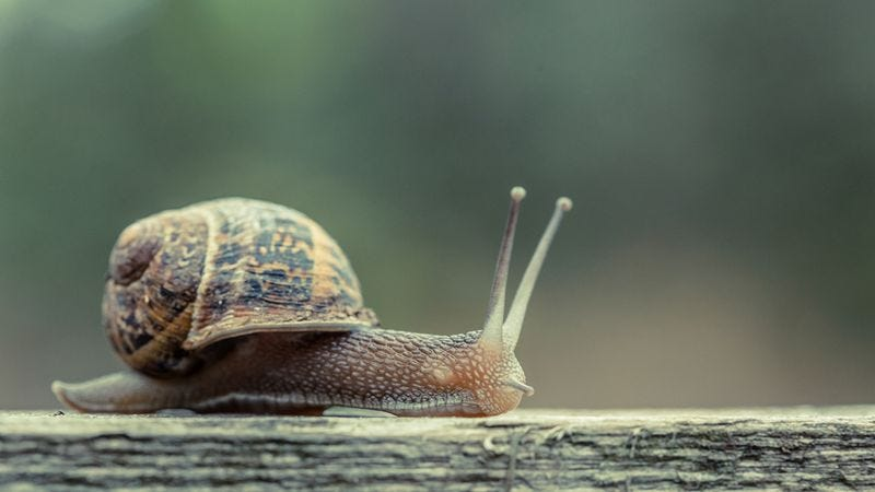 Illustration for article titled Can I Tell You My One Thing About Snails?