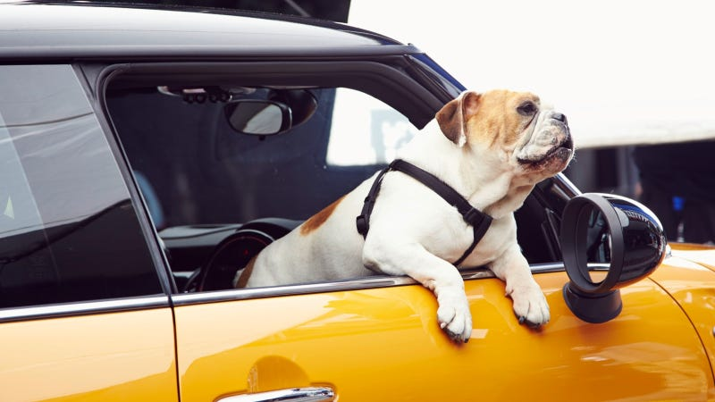 Illustration for article titled The Bulldog Is Back – The New Mini Is Coming