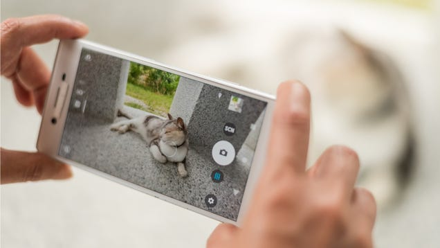 Google Photos Now Automatically Keeps Track of All Your Cat Pictures