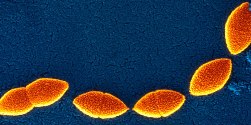 Illustration for article titled Antibiotic Resistance Actually Makes Some Bacteria Stronger