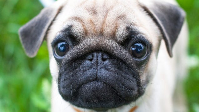 Dog Owners Fake Cried So Researchers Could Confirm The Sweet Truth