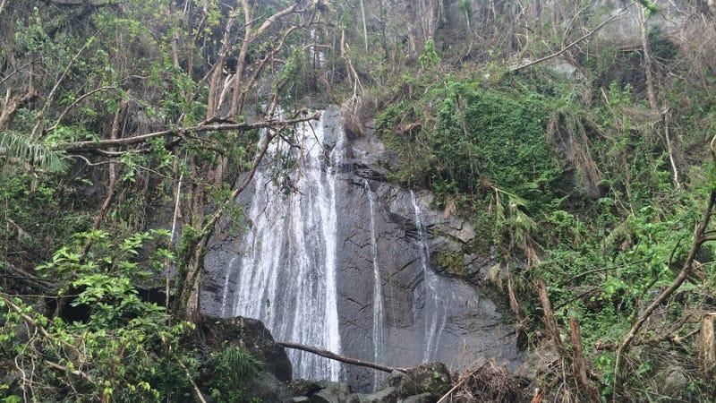 El Yunque's iconic La Coca falls, on October 4th. Photo Courtesy of Grizelle González