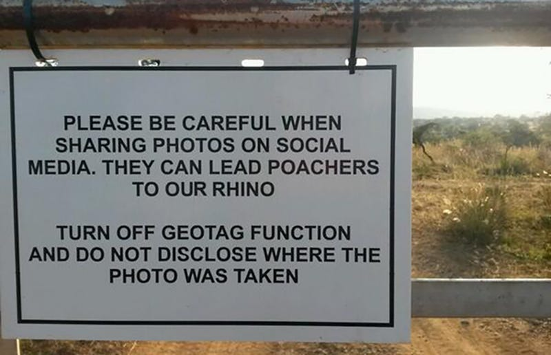 Illustration for article titled Poachers Can Use Your Geotagged Safari Photos To Hunt Down Rhinos