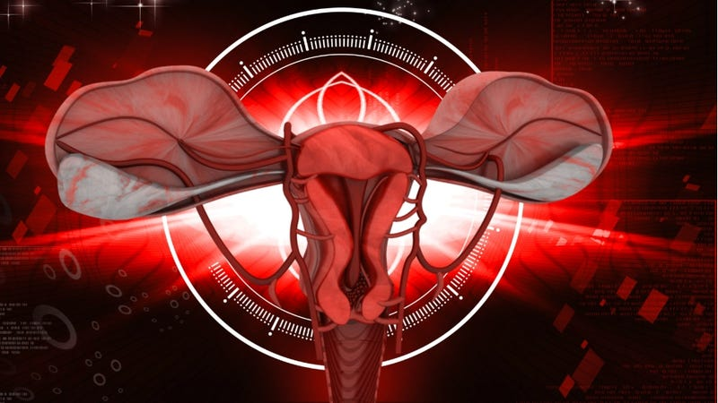 Illustration for article titled Biology Teacher Faces Investigation for Use Of Word 'Vagina' in Anatomy Lesson