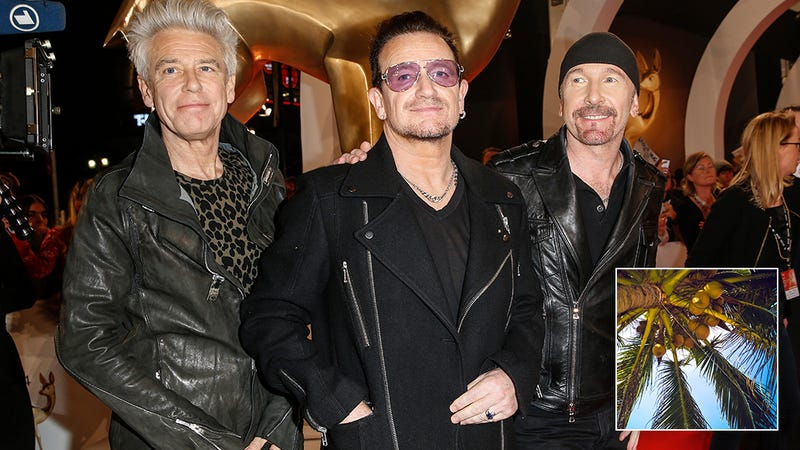 Illustration for article titled Absolutely Devastating: The Members Of U2 Have Announced That Bono Is Going To Get Bonked On The Head By A Coconut And Die In Exactly 3 Years