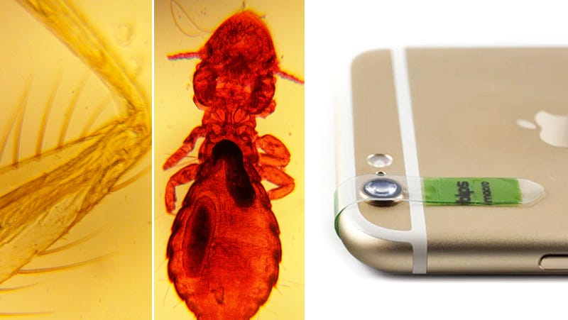 Stick-On Lenses Turn Your Phone Camera Into a Microscope