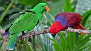Illustration for article titled The brutal secret to how parrots survive floods