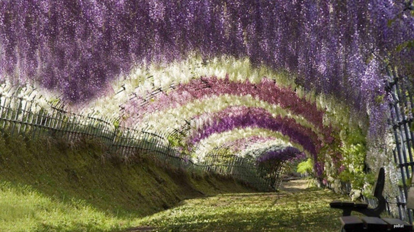 Algunos de los túneles más extraordinarios del mundo