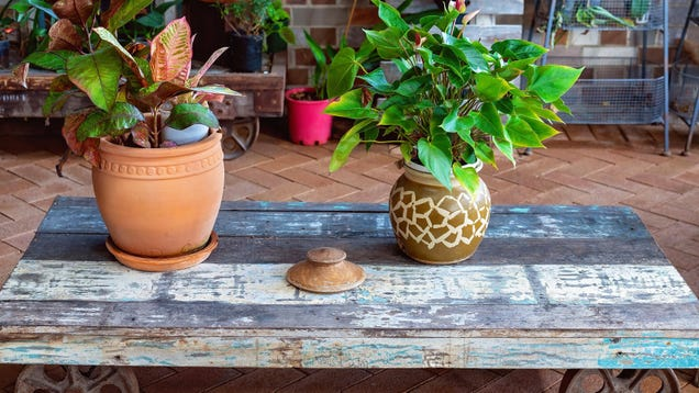 How to Properly Move Your Houseplants Outdoors for the Summer, Because You re Doing It Wrong