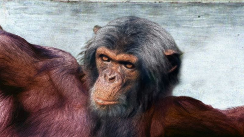Researchers say today's Lord Almighty shares many traits in common with the chimp deity, including color vision and omniscience.